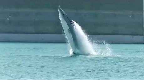 如果用海豚、鲨鱼等外形做成快艇如何?来看看经济型快艇吧!